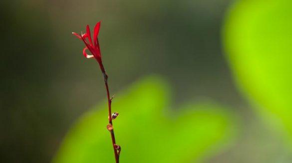Aloneness Osho Meditation &Amp; Relationship