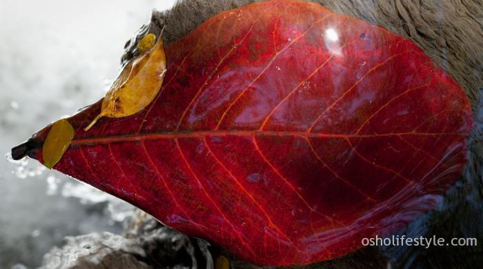 चेतनमय यात्रा : ओशो, अमृता और नरेन्द्र मोदी