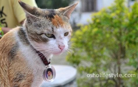 गुरु कह गये थे कि बेटा सब करना पर बिल्ली को मत पालना। OSHO